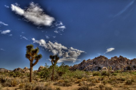 Joshua Tree NP_2